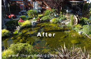 The Proper Pond Design is essential to success