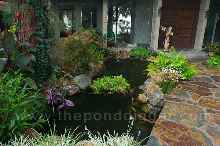 koi pond construction
