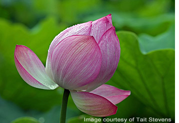 The last Lotus of the year