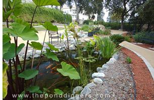 California Pond Construction
